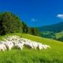 FAKRO stawia na energooszczędność i ekologię